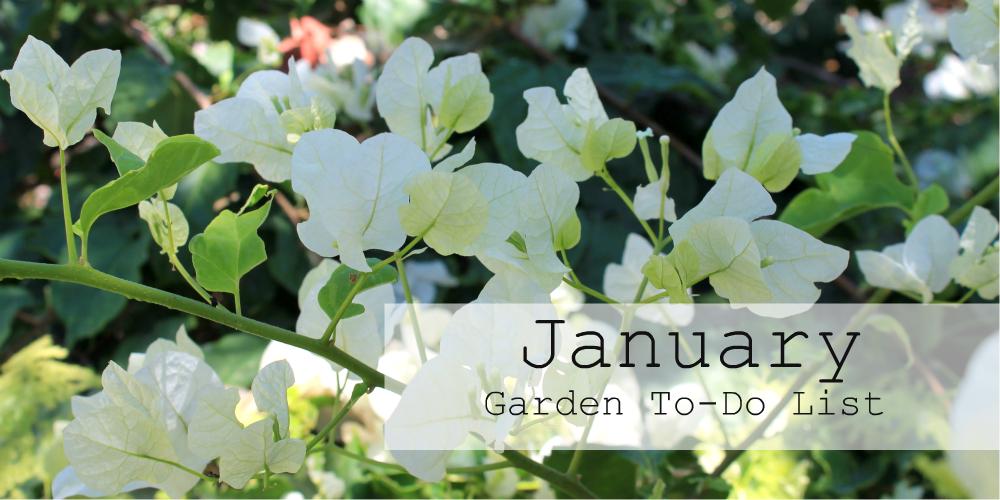 January Garden To Do List